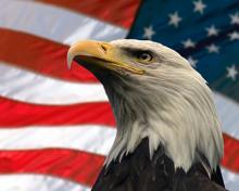 American eagle with USA flag