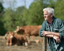 retired man looking at cattle