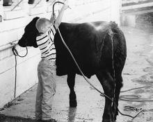 4H fair young boy washing beef project