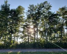 sun set behind trees in Bath Indiana